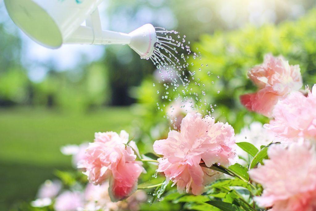 Watering, Flowers, gardening